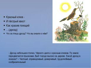 Красный клюв - И пёстрый хвост Как красив поющий …(дрозд) Что за птица дрозд?