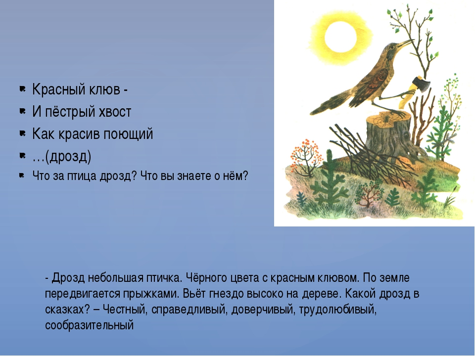 Красный клюв - И пёстрый хвост Как красив поющий …(дрозд) Что за птица дрозд?...