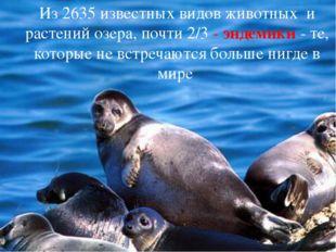 Из 2635 известных видов животных и растений озера, почти 2/3 - эндемики - те,