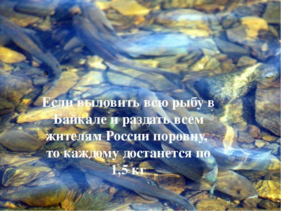 Если выловить всю рыбу в Байкале и раздать всем жителям России поровну, то ка...
