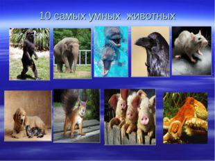 10 самых умных животных .