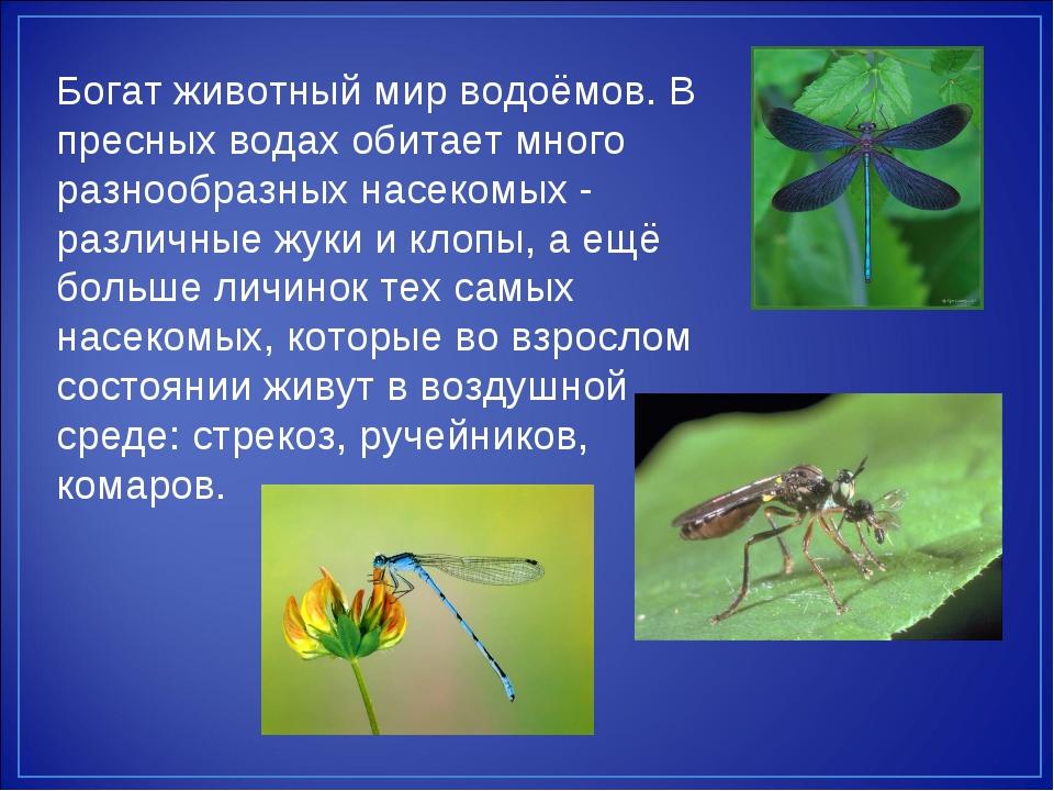 обитателями края водоёмов с знакомство ставропольского