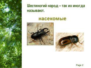 Шестиногий народ – так их иногда называют. насекомые Free Powerpoint Template