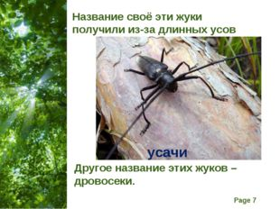 Название своё эти жуки получили из-за длинных усов Другое название этих жуков