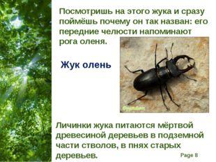 Посмотришь на этого жука и сразу поймёшь почему он так назван: его передние ч