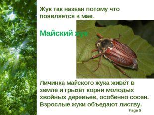 Жук так назван потому что появляется в мае. Майский жук Личинка майского жука