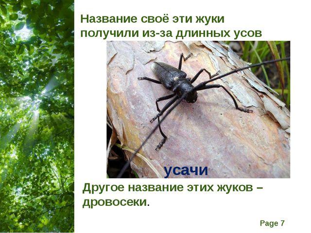 Название своё эти жуки получили из-за длинных усов Другое название этих жуков...