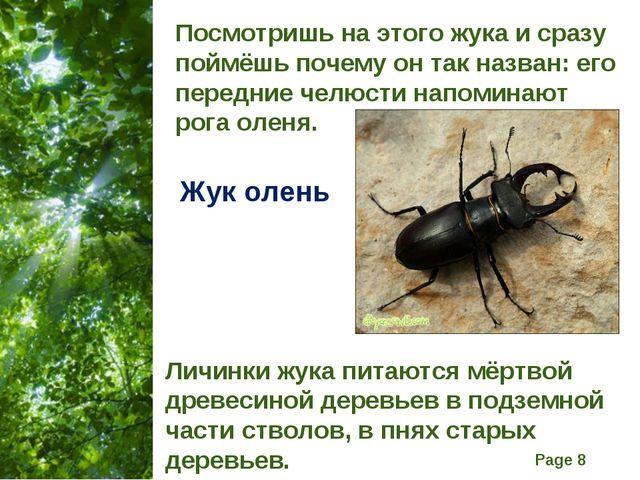Посмотришь на этого жука и сразу поймёшь почему он так назван: его передние ч...