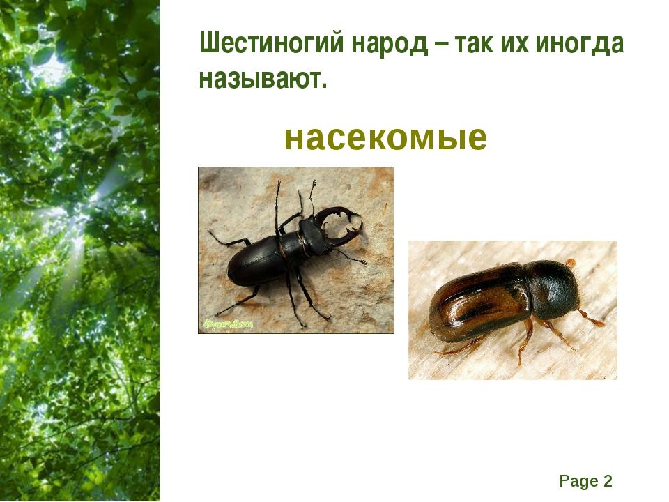 Шестиногий народ – так их иногда называют. насекомые Free Powerpoint Template...