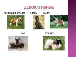 Английский бульдог Пудель Шелти Той Пекинес