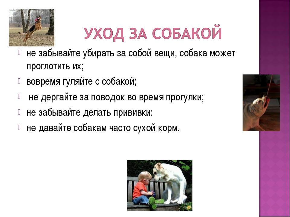 не забывайте убирать за собой вещи, собака может проглотить их; вовремя гуляй...