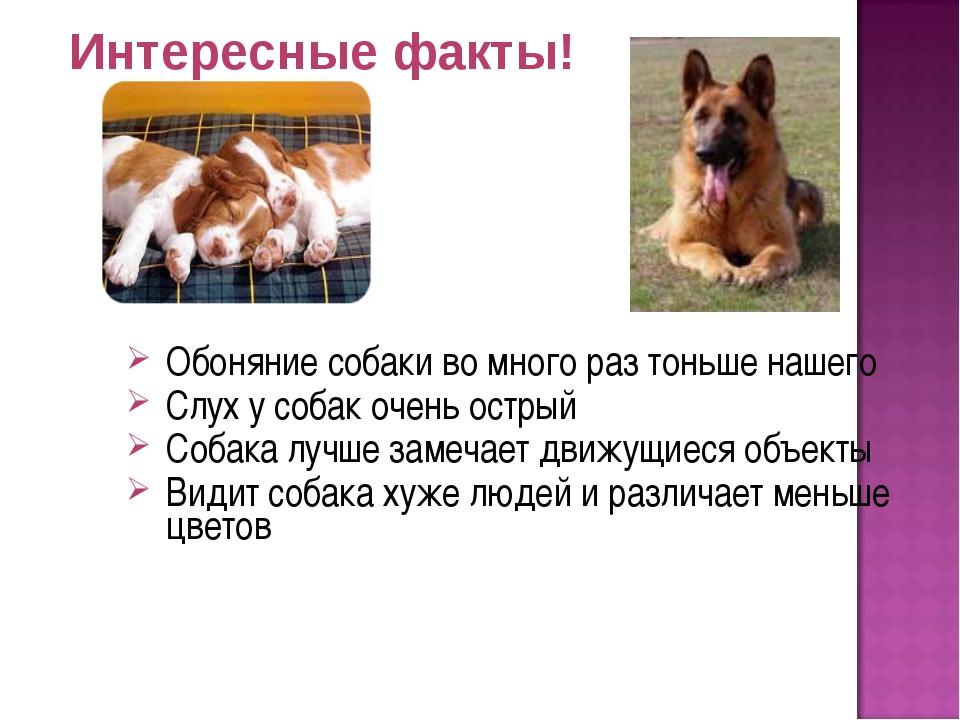 Интересные факты! Обоняние собаки во много раз тоньше нашего Слух у собак оче...