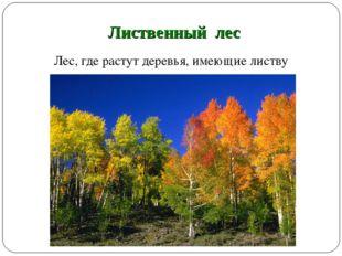 Лиственный лес Лес, где растут деревья, имеющие листву