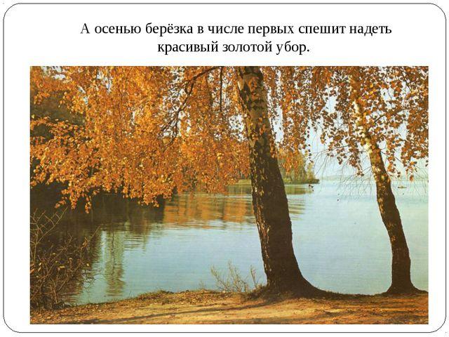 А осенью берёзка в числе первых спешит надеть красивый золотой убор.