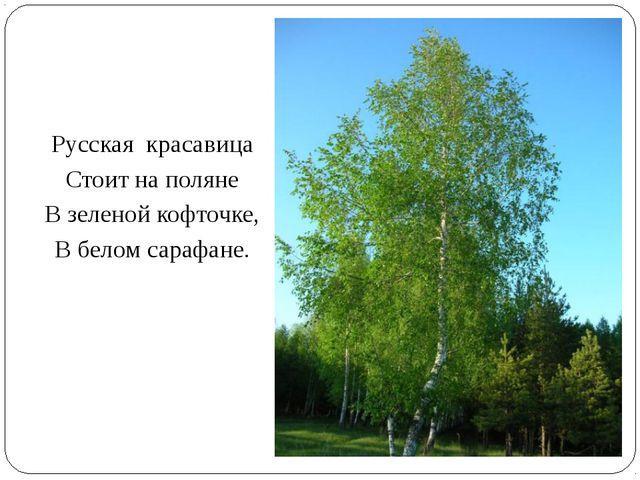 Русская красавица Стоит на поляне В зеленой кофточке, В белом сарафане.