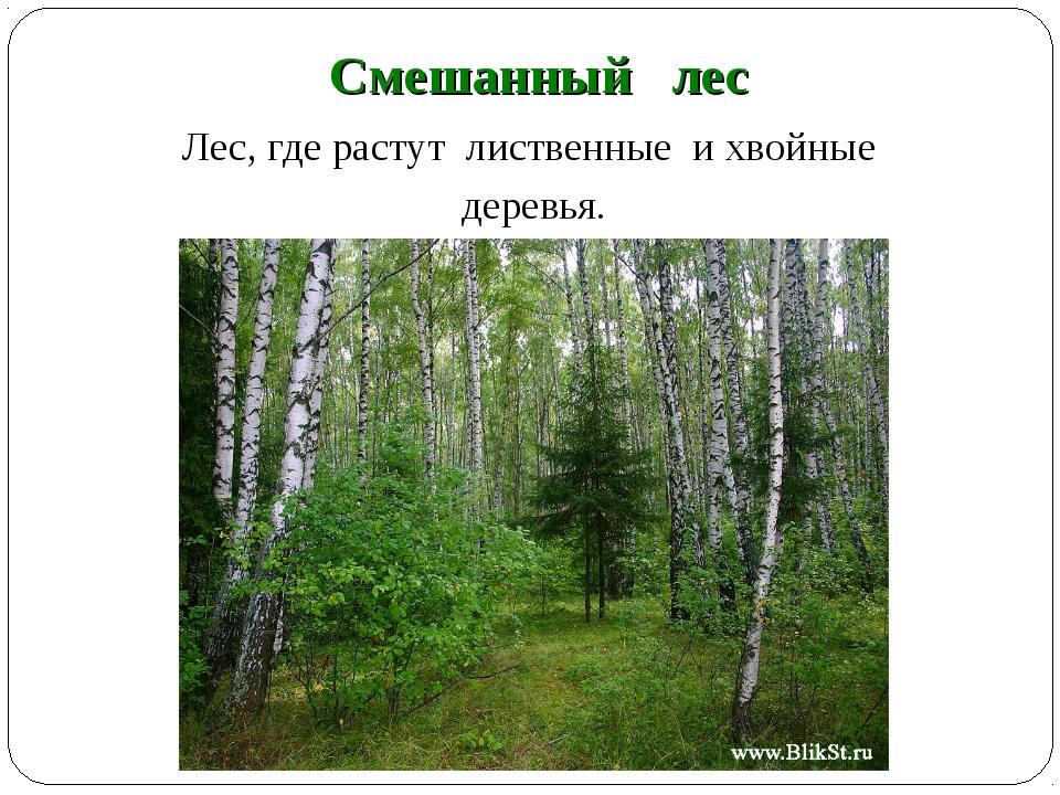 Смешанный лес Лес, где растут лиственные и хвойные деревья.