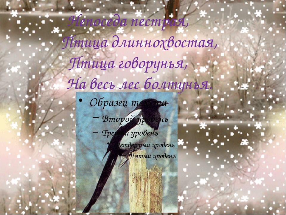 Непоседа пестрая, Птица длиннохвостая, Птица говорунья, На весь лес болтунья.