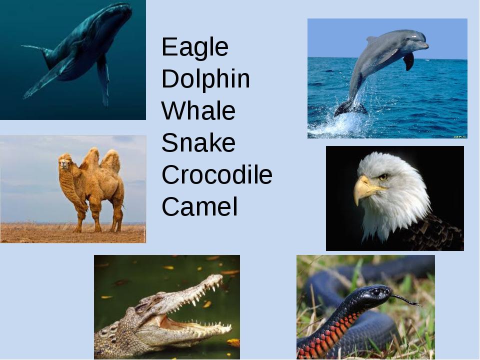 Eagle Dolphin Whale Snake Crocodile Camel