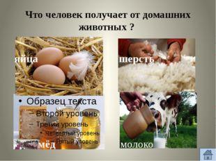 Что человек получает от домашних животных ? яйца мёд шерсть молоко
