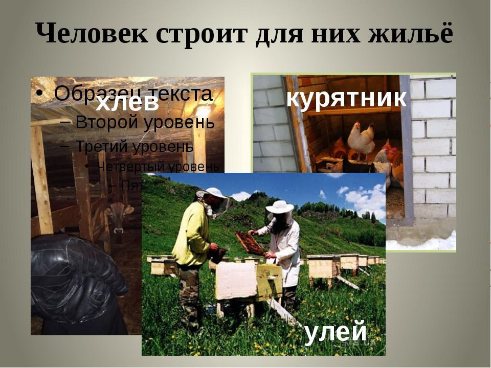 Человек строит для них жильё улей хлев курятник