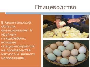 Птицеводство В Архангельской области функционирует 6 крупных птицефабрик, ко