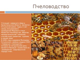 Пчеловодство Столицей северного мёда в Архангельской области является Устьян