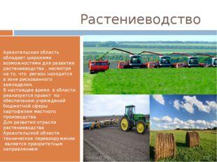 Растениеводство Архангельская область обладает широкими возможностями для ра