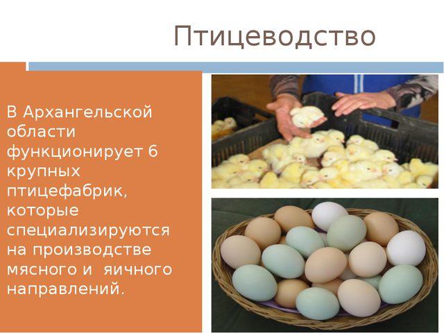 Птицеводство В Архангельской области функционирует 6 крупных птицефабрик, ко...