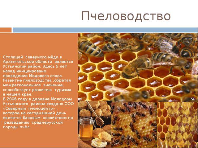 Пчеловодство Столицей северного мёда в Архангельской области является Устьян...