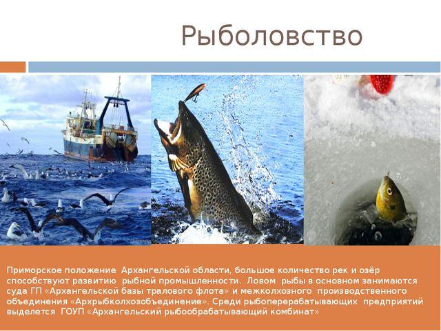 Рыболовство Приморское положение Архангельской области, большое количество р...
