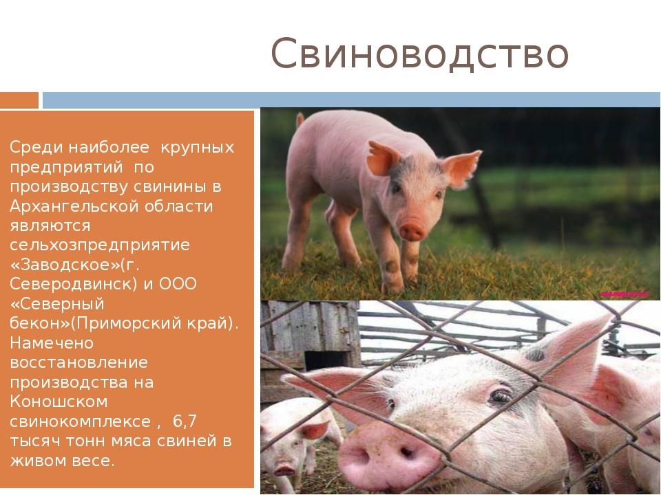 Свиноводство Среди наиболее крупных предприятий по производству свинины в Ар...