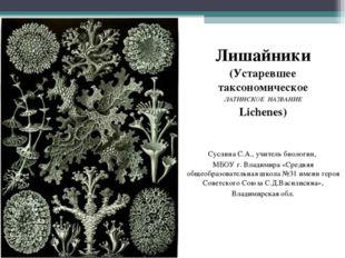 Лишайники (Устаревшее таксономическое ЛАТИНСКОЕ НАЗВАНИЕ Lichenes) Суслина С