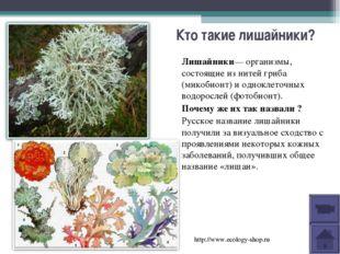 Кто такие лишайники? Лишайники—организмы, состоящие из нитей гриба (микобион