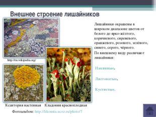 Внешнее строение лишайников Лишайники окрашены в широком диапазоне цветов от