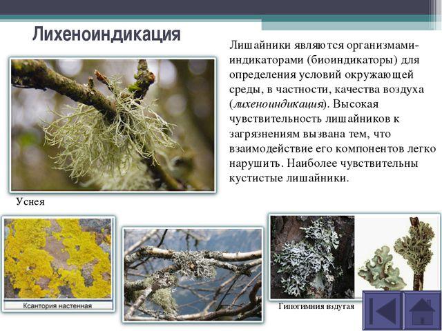 Лихеноиндикация Лишайники являются организмами-индикаторами (биоиндикаторы) д...