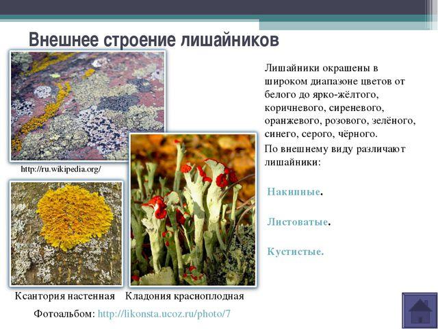 Внешнее строение лишайников Лишайники окрашены в широком диапазоне цветов от...