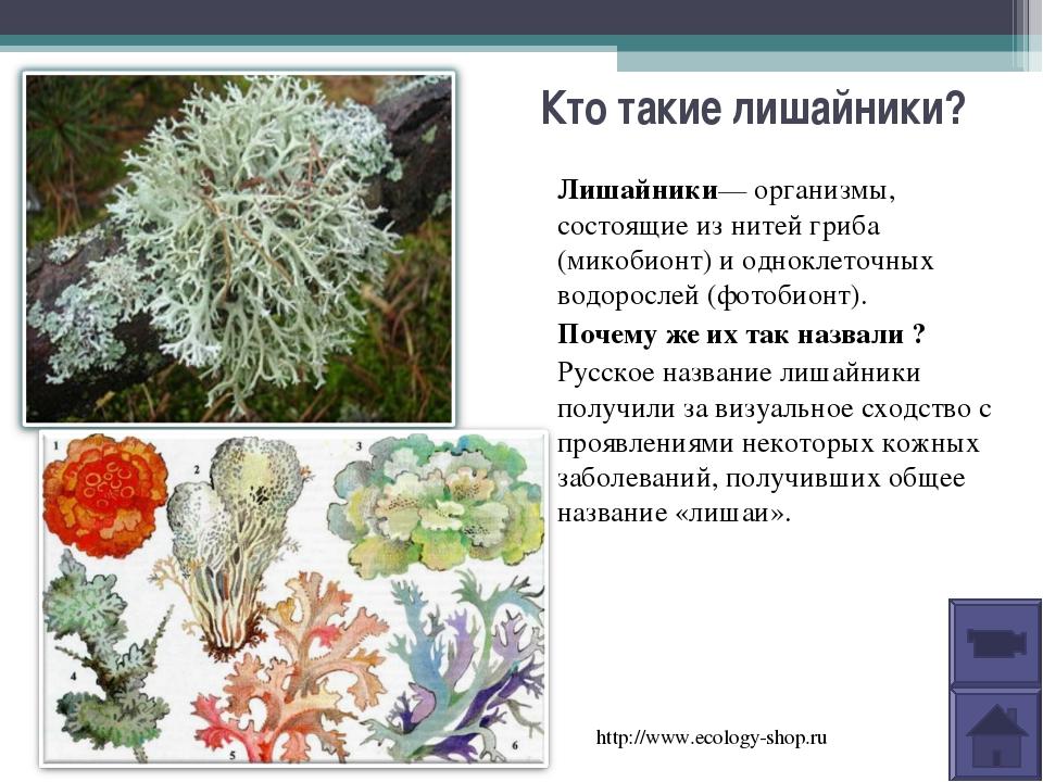 Кто такие лишайники? Лишайники—организмы, состоящие из нитей гриба (микобион...