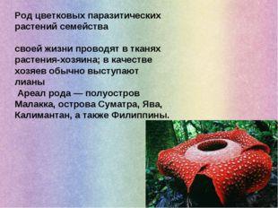 Род цветковых паразитических растений семейства Раффлезиевые, бо́льшую часть