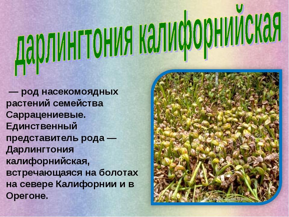 — род насекомоядных растений семейства Саррацениевые. Единственный представи...