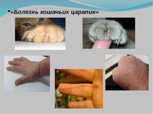 «Болезнь кошачьих царапин»