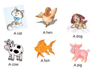 A cat A hen A dog A cow A fish A pig