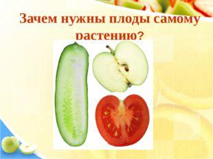 Зачем нужны плоды самому растению?
