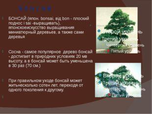 Б о н с а й БОНСАЙ (япон. bonsai, від bon - плоский поднос і sai -выращивать)
