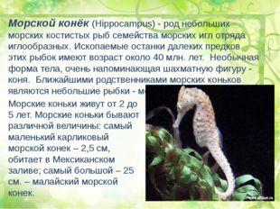 Морской конёк (Hippocampus) - род небольших морских костистых рыб семейства м