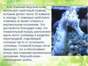 Для плавания морской конек использует хребтовый плавник, которым делает окол
