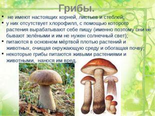 Грибы. не имеют настоящих корней, листьев и стеблей; у них отсутствует хлороф