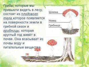 Грибы, которые мы привыкли видеть в лесу, состоят из плодового тела которое п