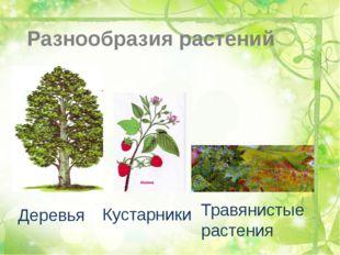 Разнообразия растений Деревья Кустарники Травянистые растения
