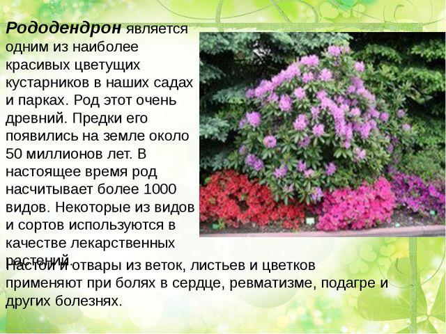 Рододендрон является одним из наиболее красивых цветущих кустарников в наших...
