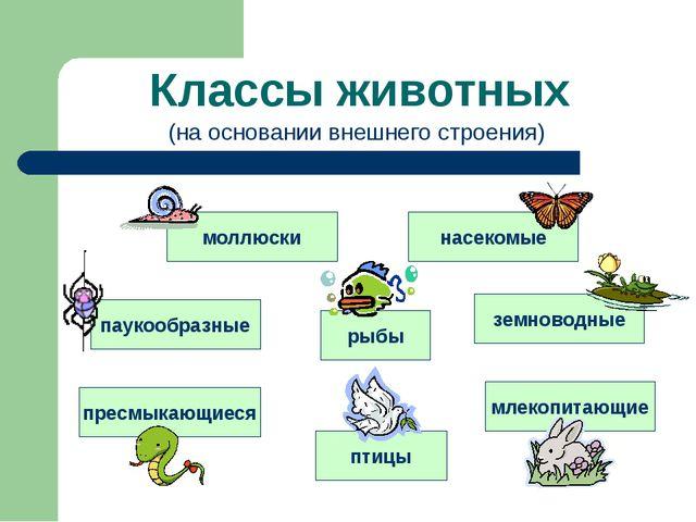 Классы животных моллюски насекомые паукообразные рыбы земноводные пресмыкающи...